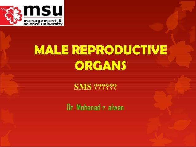 MALE REPRODUCTIVE ORGANS SMS ?????? Dr. Mohanad r. alwan