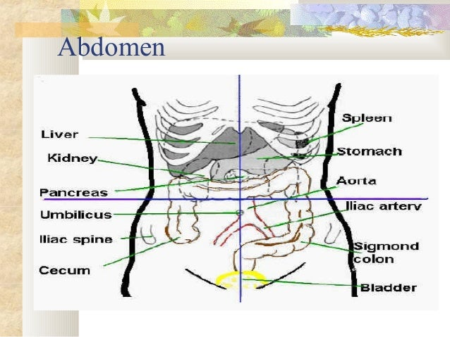 9 quadrants of abdomen and organs pdf