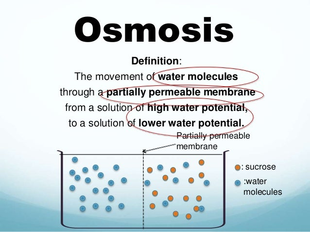 Define osmosis in biology