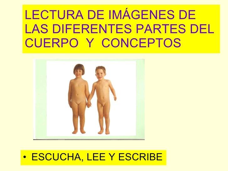 LECTURA DE IMÁGENES DE LAS DIFERENTES PARTES DEL CUERPO  Y  CONCEPTOS <ul><li>ESCUCHA, LEE Y ESCRIBE </li></ul>