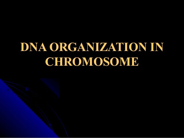 DNA ORGANIZATION IN CHROMOSOME