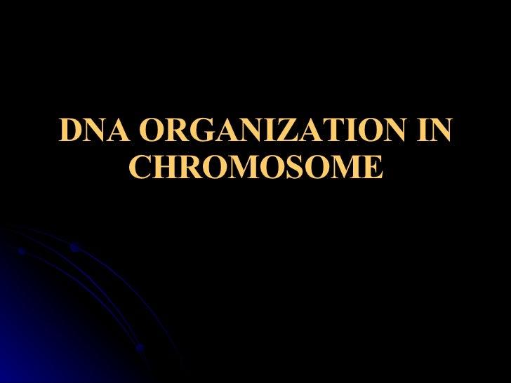 DNA ORGANIZATION IN CHROMOSOME