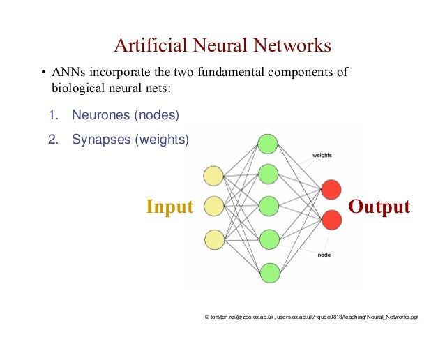 network neural thesis