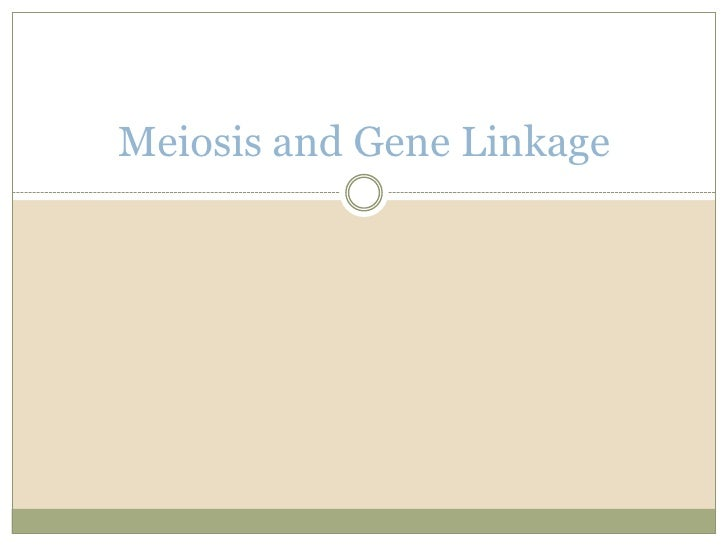 Meiosis and Gene Linkage<br />