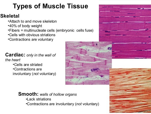 organelles worksheet