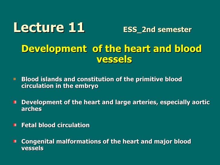 Lecture 11   ESS_2nd semester <ul><li>Development  of the heart and blood vessels  </li></ul><ul><li>Blood isl ands  and c...