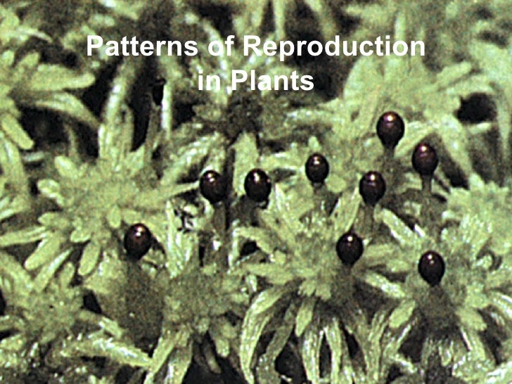 Pattern of reproduction in plant