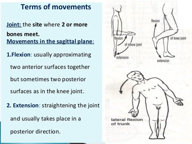 Rotation movement anatomy