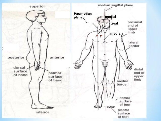 Define proximal in anatomy