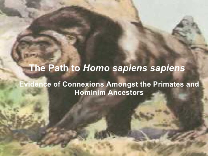 The Path to Homo sapiens sapiens Evidence of Connexions Amongst the Primates and                Hominim Ancestors