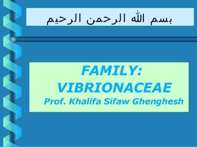 بسم ا الرحمن الرحيم  FAMILY: VIBRIONACEAE Prof. Khalifa Sifaw Ghenghesh