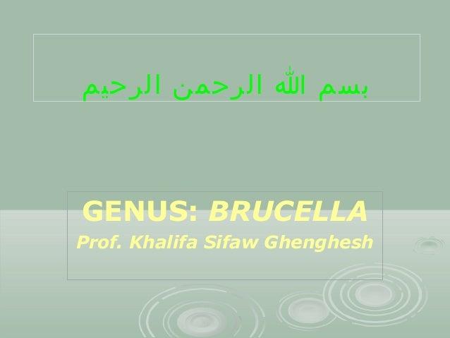 بسم ا الرحمن الرحيم  GENUS: BRUCELLA Prof. Khalifa Sifaw Ghenghesh