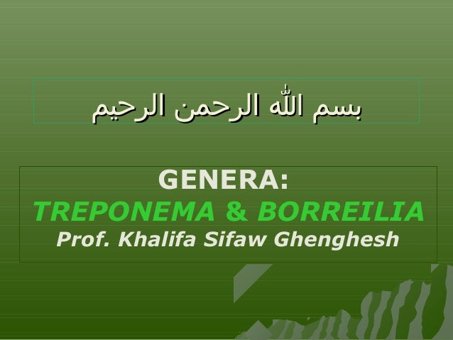 بسم ا الرحمن الرحيم GENERA: TREPONEMA & BORREILIA Prof. Khalifa Sifaw Ghenghesh