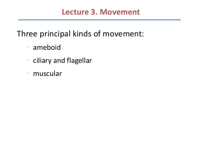 Lecture 3. MovementThree principal kinds of movement:  –      ameboid  –      ciliary and flagellar  –      muscular