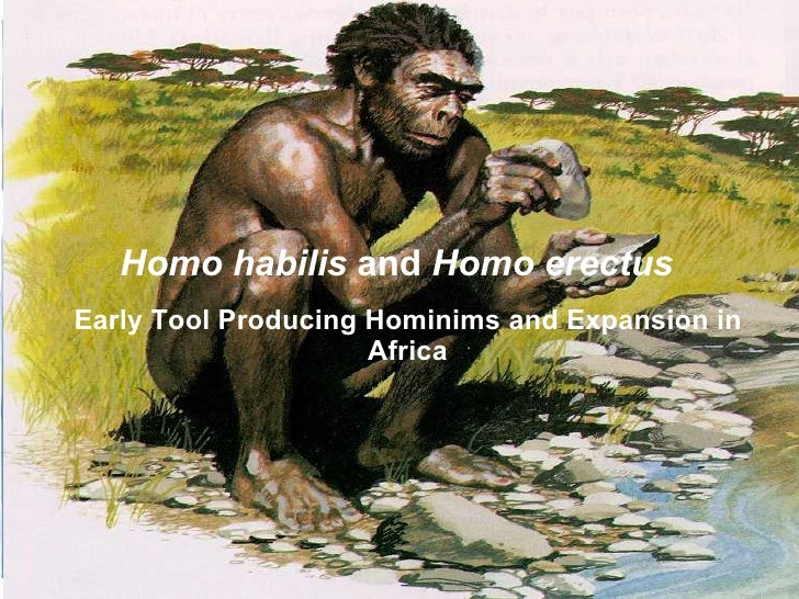 Homo habilis and Homo erectus Early Tool Producing Hominims and Expansion in                      Africa