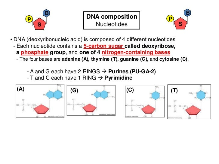 B                                                                 B        P                         DNA composition      ...