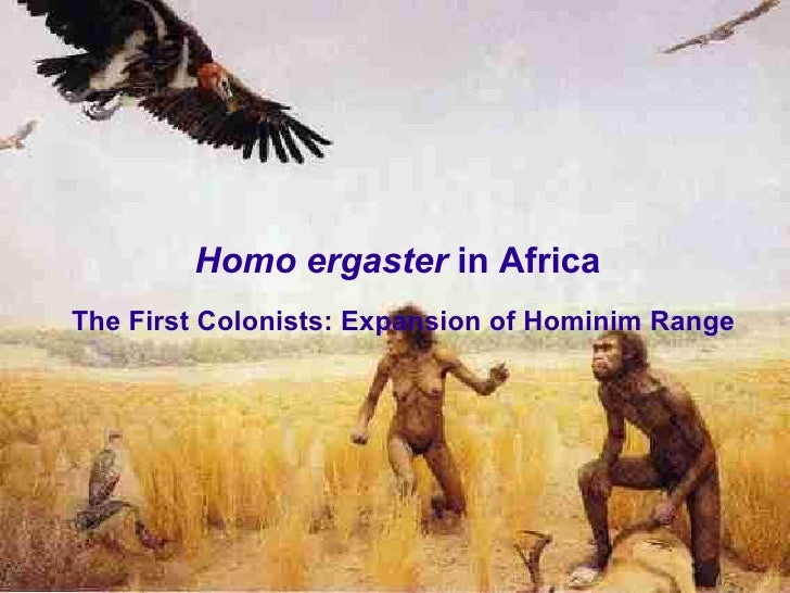 Homo ergaster in Africa The First Colonists: Expansion of Hominim Range