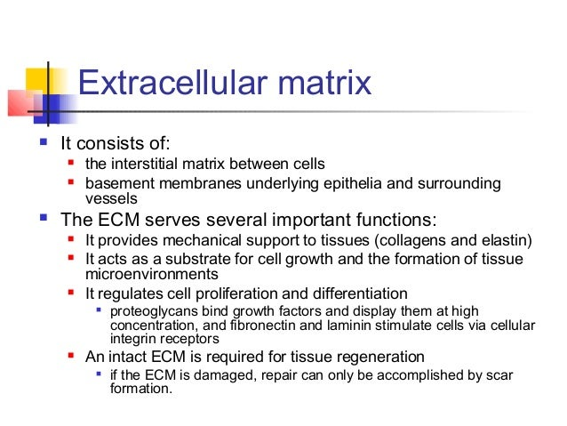 file extracellular wikimedia commons