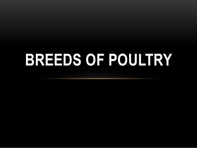 BREEDS OF POULTRY