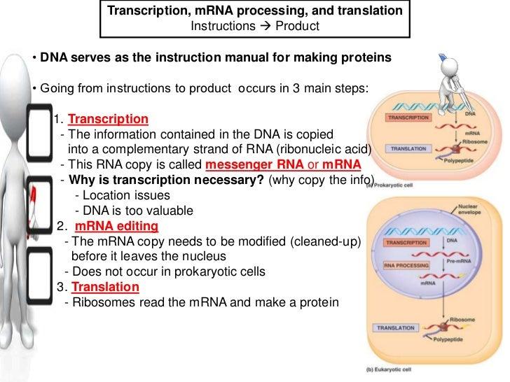 prokaryotic cells essay