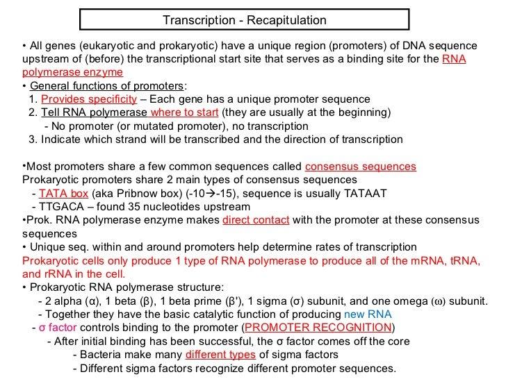 Transcription - Recapitulation• All genes (eukaryotic and prokaryotic) have a unique region (promoters) of DNA sequenceups...
