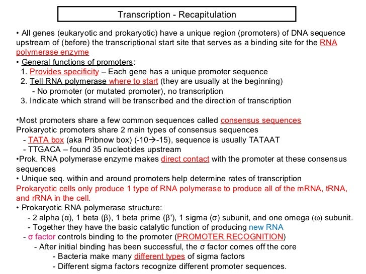 Lecture 7 (biol3600)   genetic code and translation