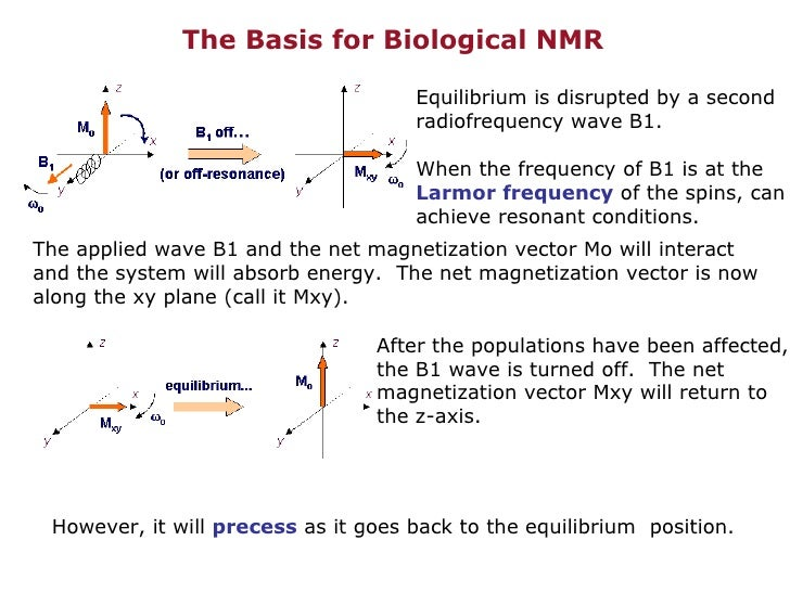 The Basis for Biological NMR Equilibrium is disrupted by a second radiofrequency wave B1. When the frequency of B1 is at t...