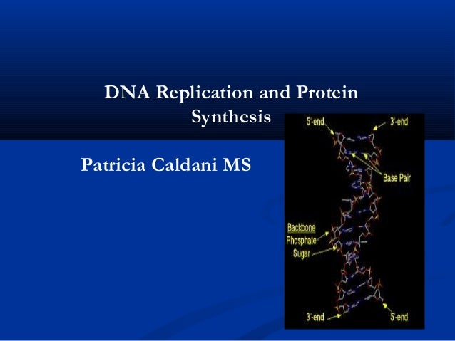 DNA Replication and Protein         SynthesisPatricia Caldani MS