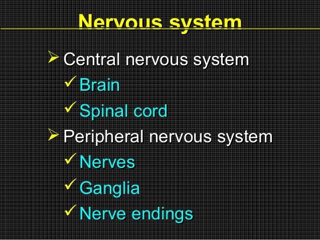 Nervous system  Central nervous system  Brain  Spinal cord  Peripheral nervous system  Nerves  Ganglia  Nerve endin...