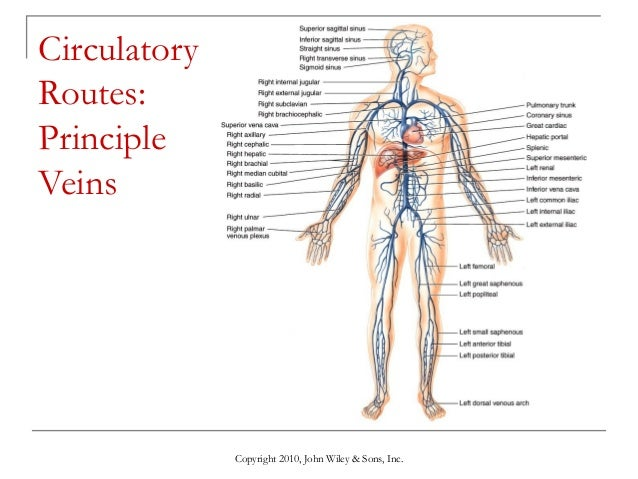 Digestive System Structure And Function Ppt further Human Reproductive System Body Parts further 8616721 likewise Circulation as well Function The Blood Circulation. on circulatory system blood flow