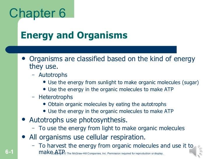 Energy and Organisms <ul><li>Organisms are classified based on the kind of energy they use. </li></ul><ul><ul><li>Autotrop...