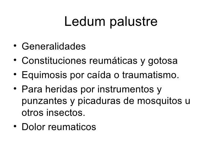 Ledum Palustre