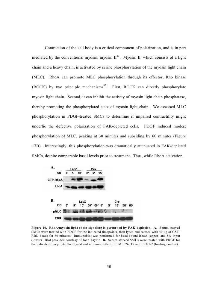 regulatory affairs+thesis
