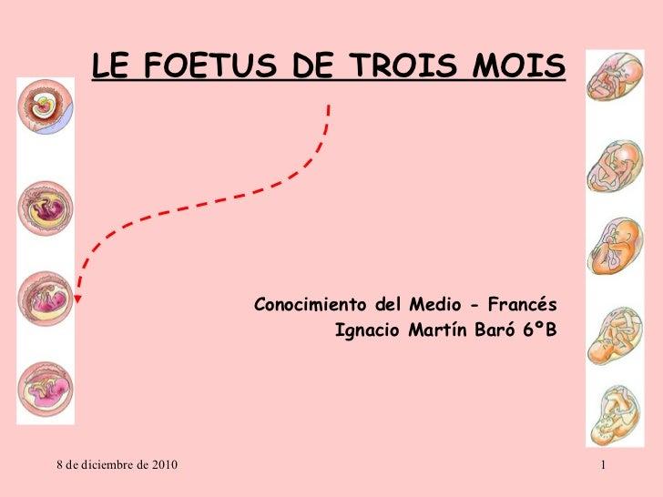 LE FOETUS DE TROIS MOIS Conocimiento del Medio - Francés Ignacio Martín Baró 6ºB 8 de diciembre de 2010