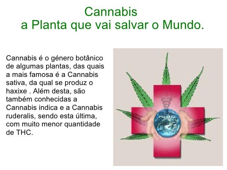 Cannabis  a Planta que vai salvar o Mundo. Cannabis é o género botânico de algumas plantas, das quais a mais famosa é a Ca...