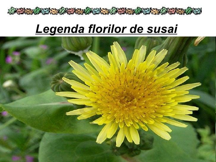 Legenda florilor de susai
