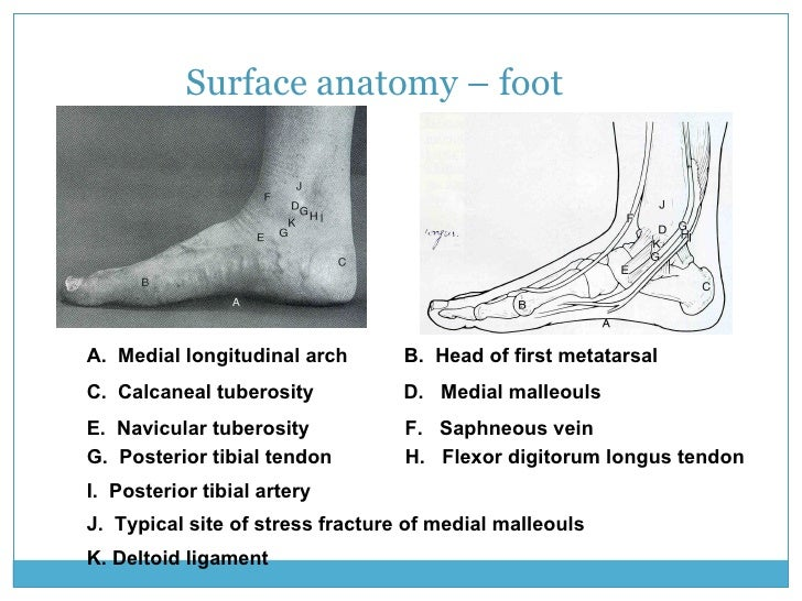 Surface anatomy landmarks