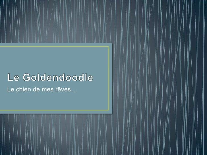 Le Goldendoodle<br />Le chien de mes rêves…<br />