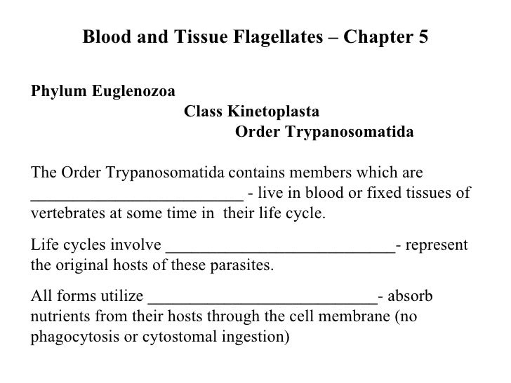 Blood and Tissue Flagellates – Chapter 5 Phylum Euglenozoa   Class Kinetoplasta  Order Trypanosomatida The Order Trypanoso...