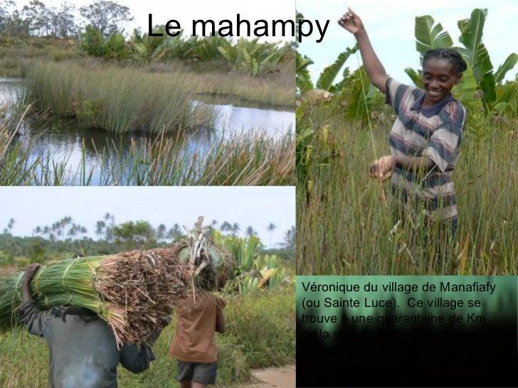 Le mahampy Véronique du village de Manafiafy (ou Sainte Luce).  Ce village se trouve à une quarantaine de Km de la ville d...