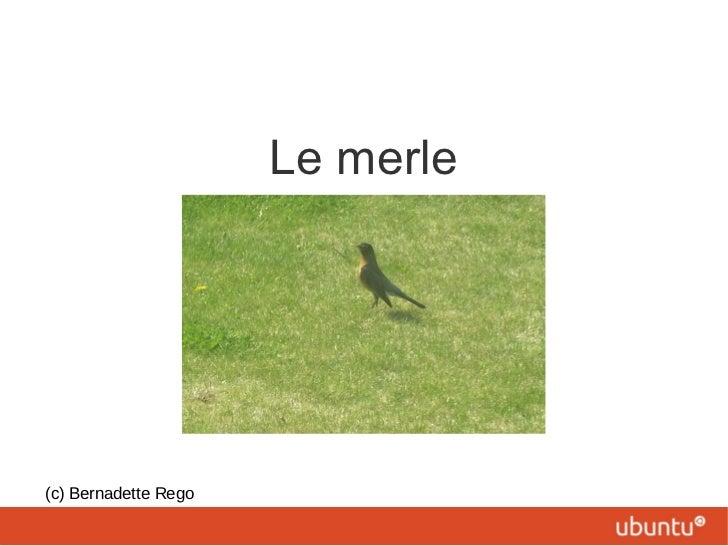 Le merle (c) Bernadette Rego