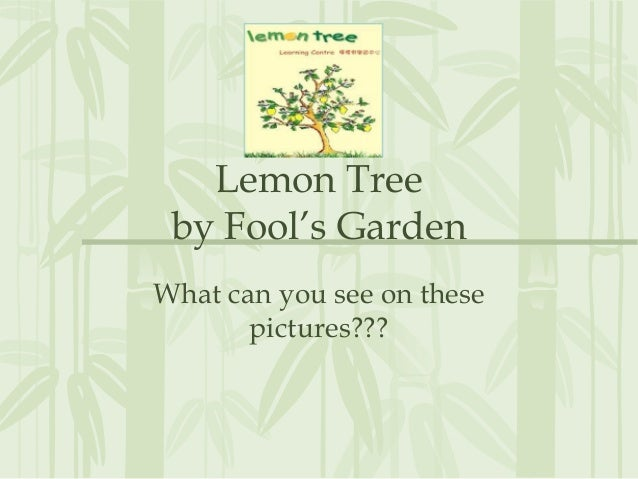 Lemon Tree by Fool's Garden What can you see on these pictures???