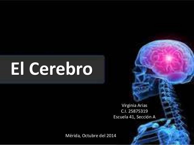 El Cerebro  Virginia Arias  C.I. 25875319  Escuela 41, Sección A  Mérida, Octubre del 2014