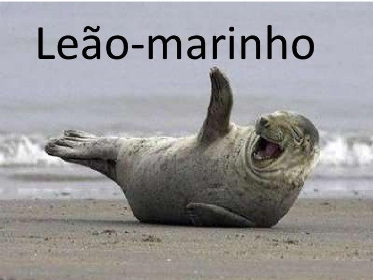 Leão marinho