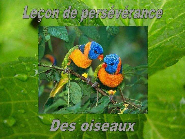 Leçon de persévérance des oiseaux...