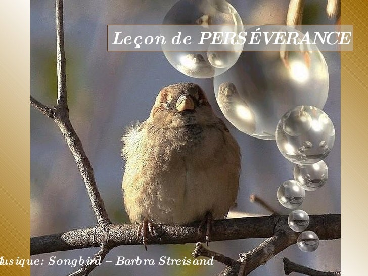 Leçon des Oiseaux
