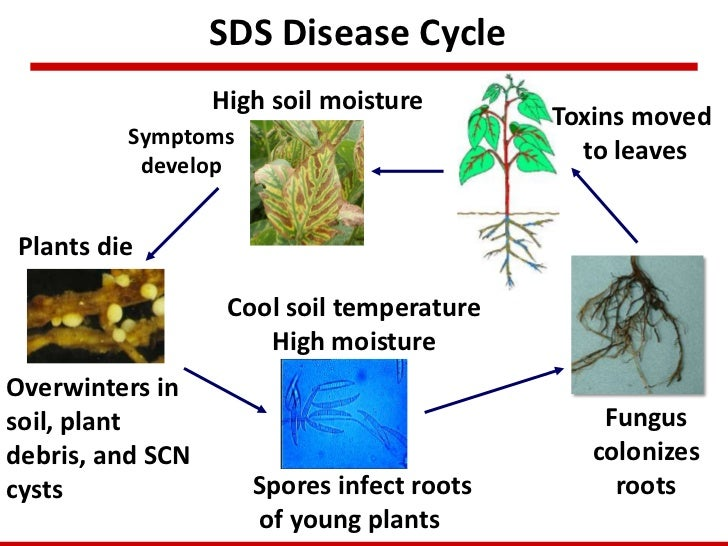 Pest management leonor leandro iowa state univeristy for Soil 7 days to die