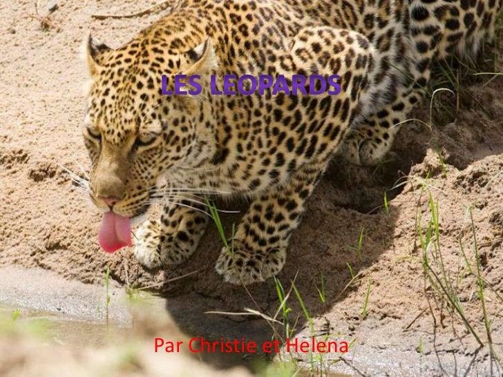 Leopardmaher