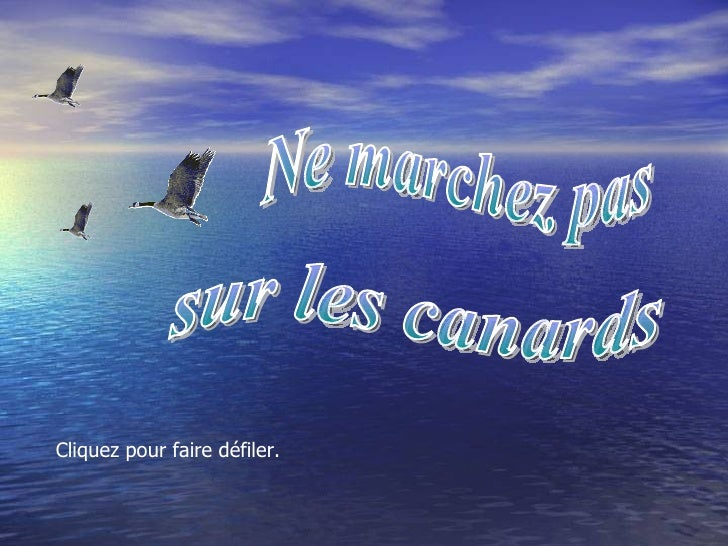 Ne marchez pas sur les canards Diaporamas-a-la-con.com Diaporama PPS réalisé pour http://www.diaporamas-a-la-con.com Ne ma...