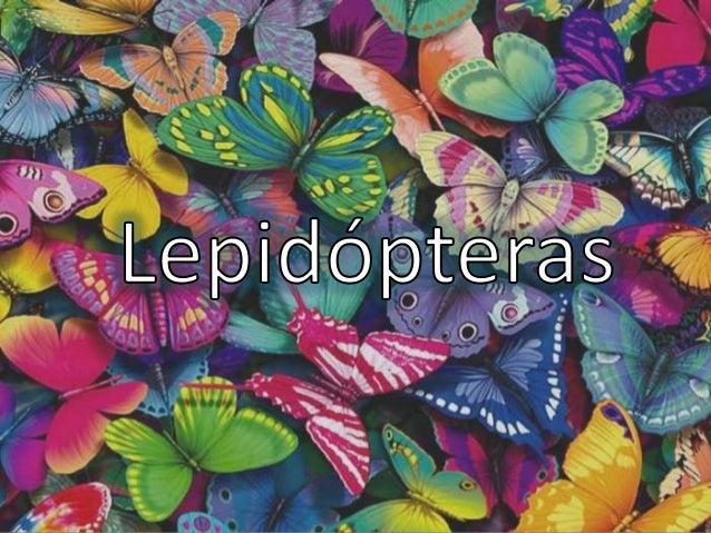 Índice • ¿Qué son? • Taxonomía • Filogenia • Morfología externa • Reproducción • Fase larvaria • Metamorfosis